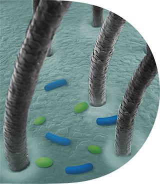 microbiom Dezechilibru