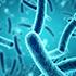 specii de bacterii centrale